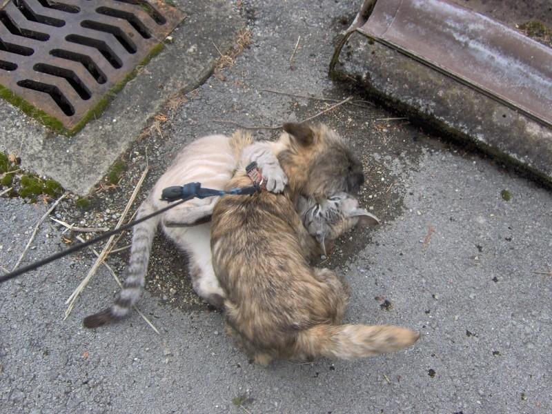 Alinka    cairn terrier Combe_12