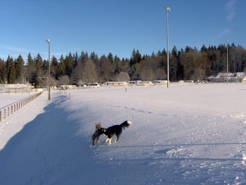 Alinka    cairn terrier - Page 2 Janvie17