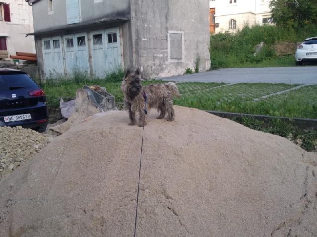 Alinka    cairn terrier Photo024
