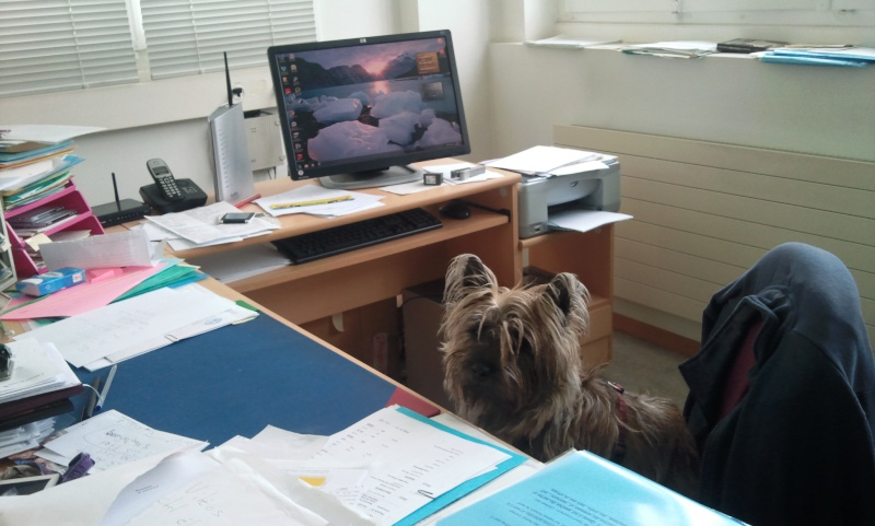 Alinka    cairn terrier - Page 2 Photo050