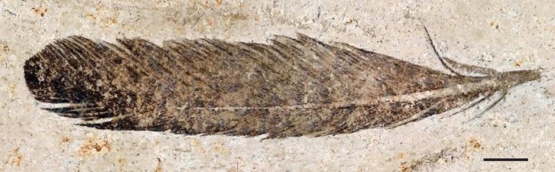 Paleontologie, l'actu... - Page 4 Archeo11