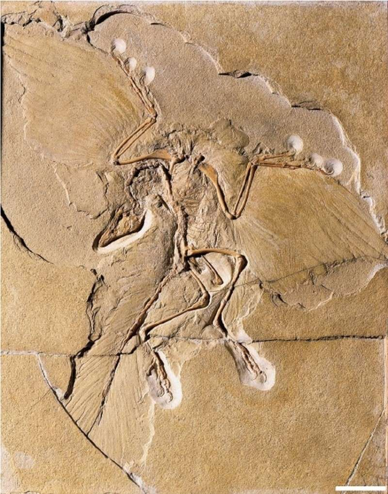 Paleontologie, l'actu... - Page 4 Archeo12
