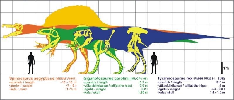 Paleontologie, l'actu... - Page 5 Compar11