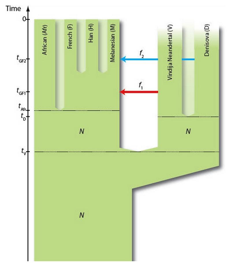 Paleontologie, l'actu... - Page 4 Deniso11
