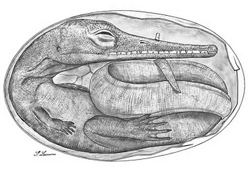 Paleontologie, l'actu... - Page 5 Embryo12