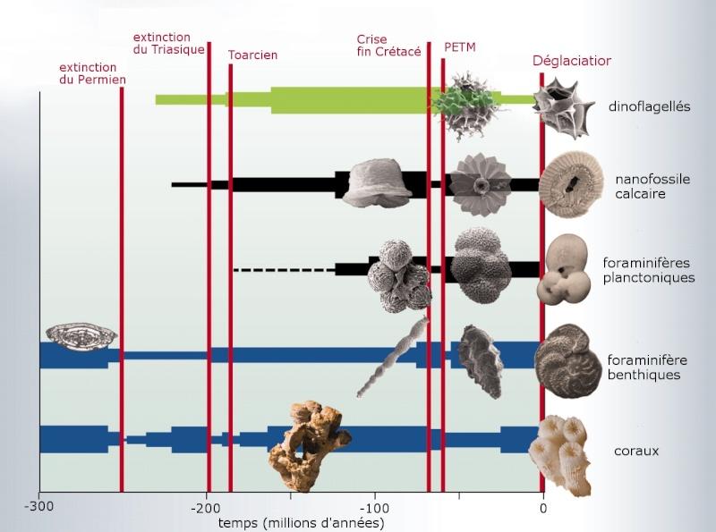 Paleontologie, l'actu... - Page 4 Hnoisc10