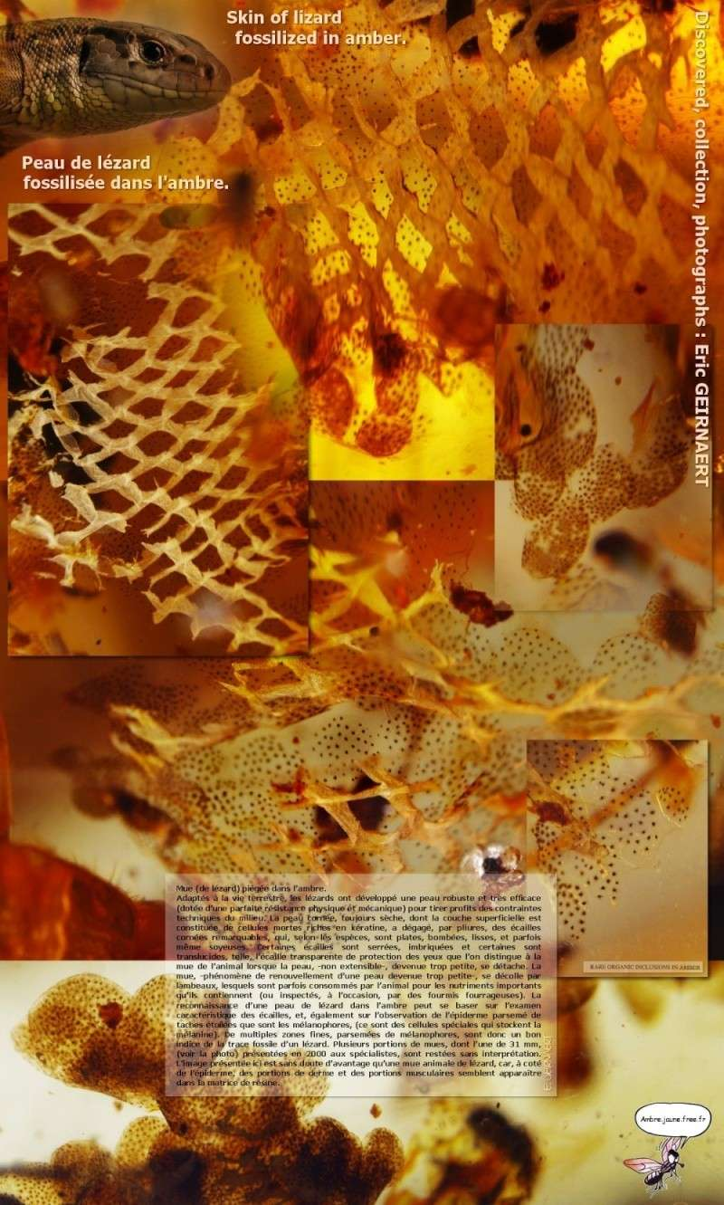 Paleontologie, l'actu... - Page 4 Image_11