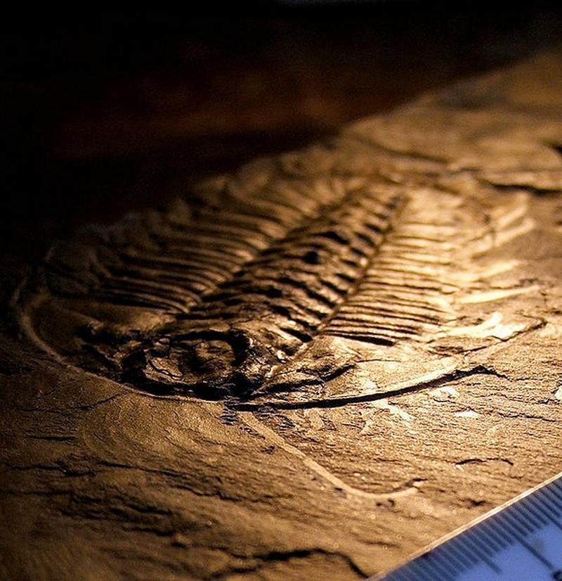 Paleontologie, l'actu... - Page 5 Legged10