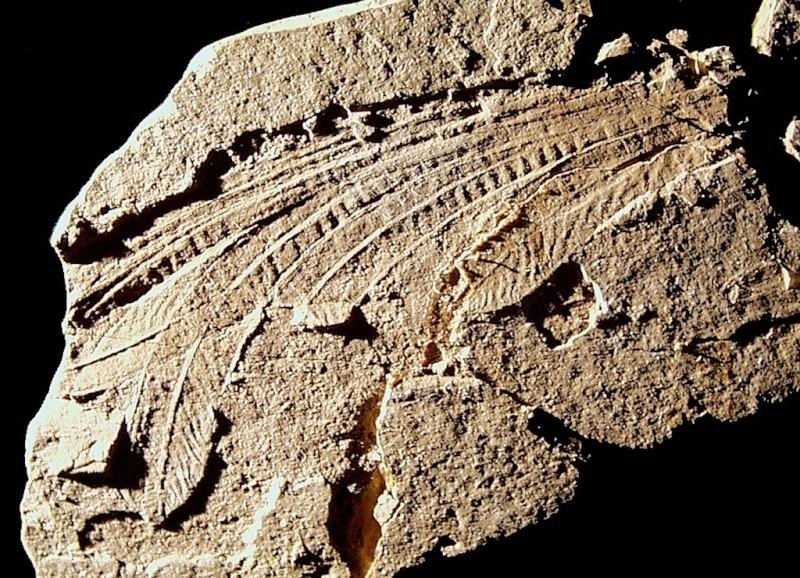 Paleontologie, l'actu... - Page 5 Longis10
