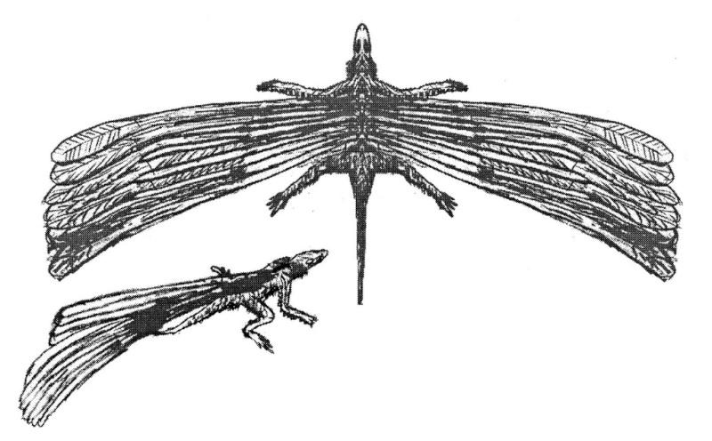 Paleontologie, l'actu... - Page 5 Longis11