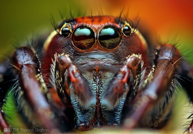 Zoologie... Male_a10