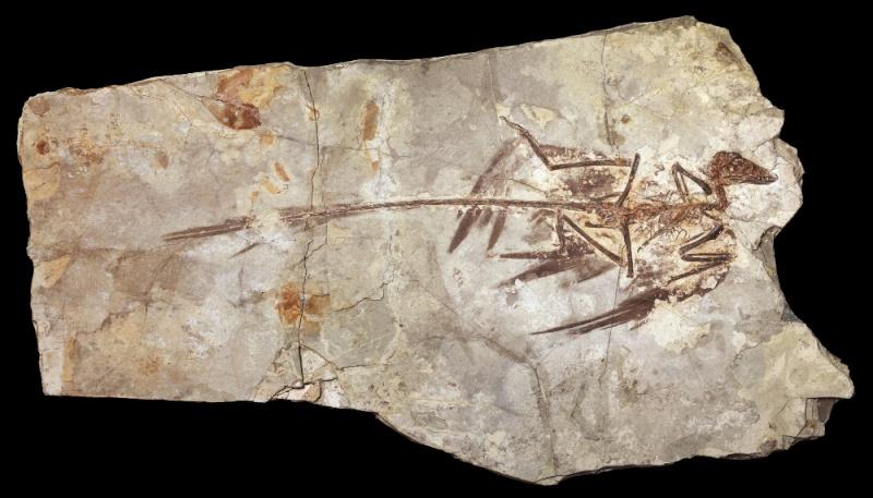 Paleontologie, l'actu... - Page 5 Micror11
