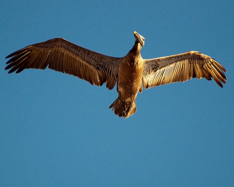 Paleontologie, l'actu... - Page 3 Oiseau10