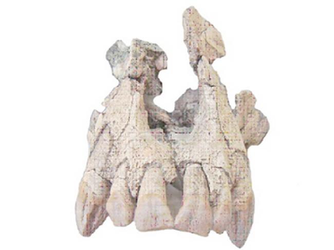 Paleontologie, l'actu... - Page 3 Photo_10