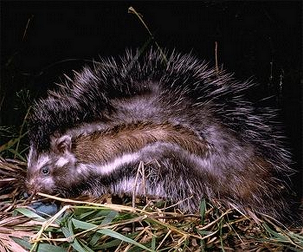 Zoologie... Rat-a-10