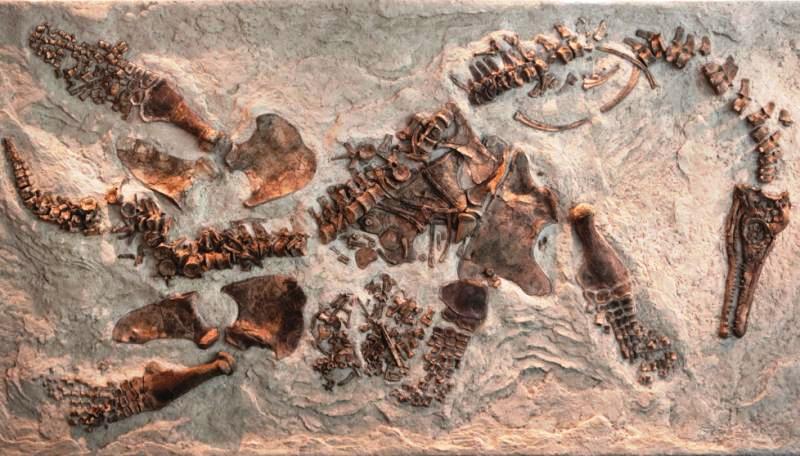 Paleontologie, l'actu... - Page 3 Rtema313