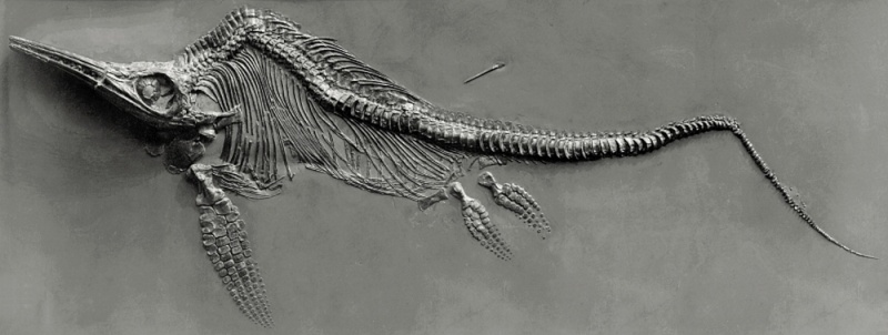 Paleontologie, l'actu... - Page 3 Rtema452