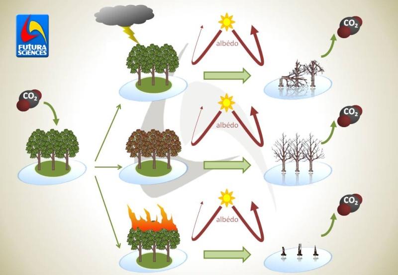 Les impacts positifs et négatifs du réchauffement climatique… Rtema480