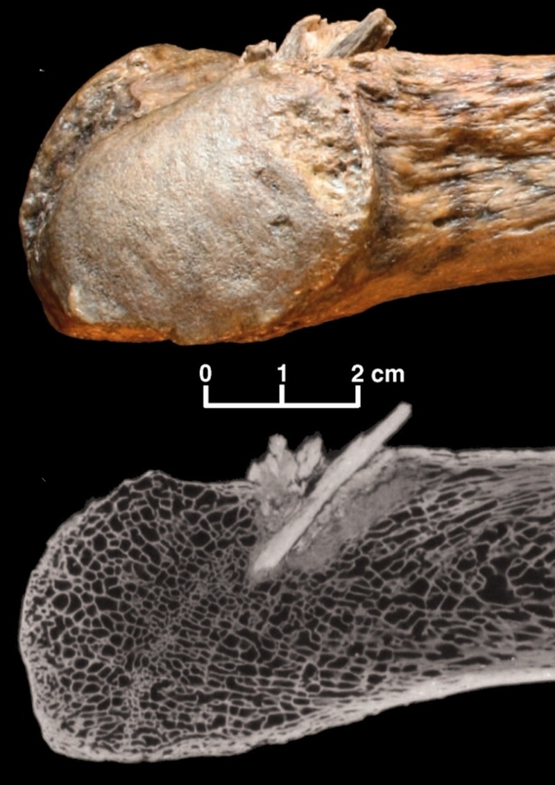 Paleontologie, l'actu... - Page 3 Rtema500