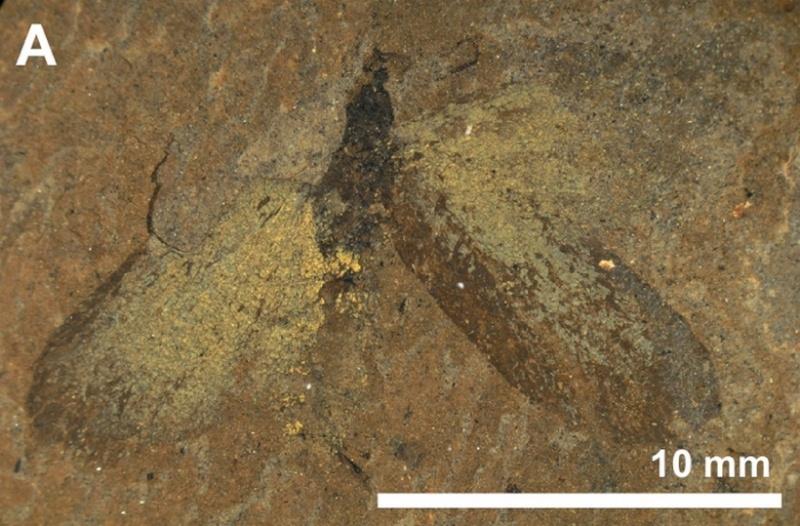 Paleontologie, l'actu... - Page 3 Rtema555