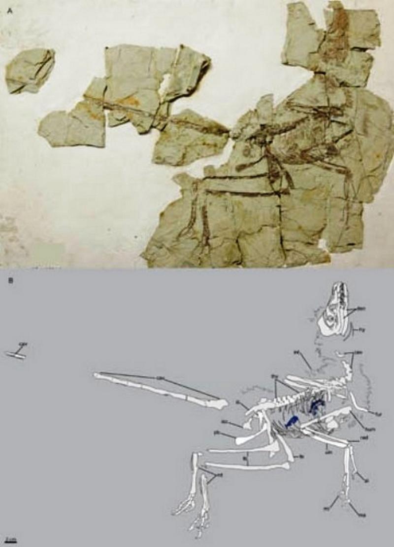 Paleontologie, l'actu... - Page 3 Rtema573