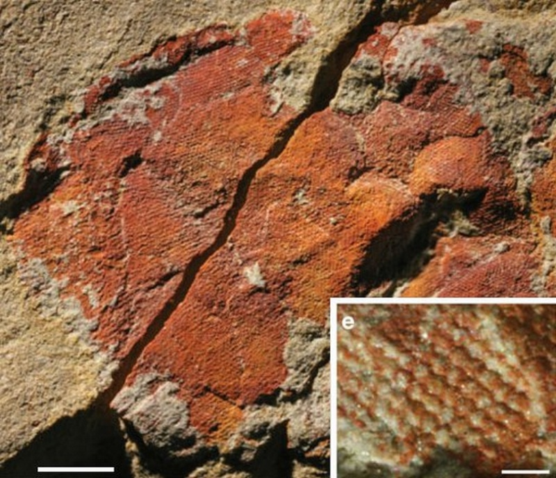 Paleontologie, l'actu... - Page 3 Rtema600