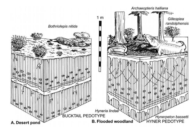 Paleontologie, l'actu... - Page 4 Rtema667