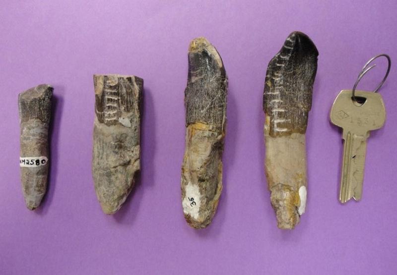 Paleontologie, l'actu... - Page 3 Saurop10