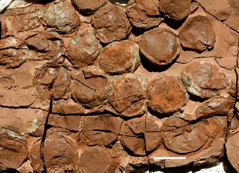 Paleontologie, l'actu... - Page 4 Site_n10