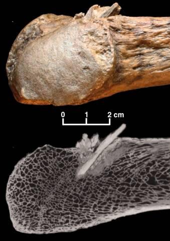 Le datage du carbone est souvent utilisé pour déterminer l'âge d'un fossile. par exemple un crâne Humanoïde Agence de rencontres Cyrano Sub Thai