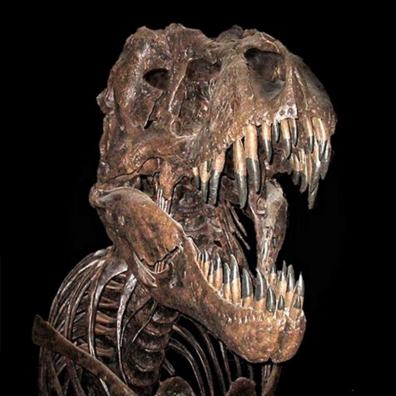 Paleontologie, l'actu... - Page 4 Trex-010