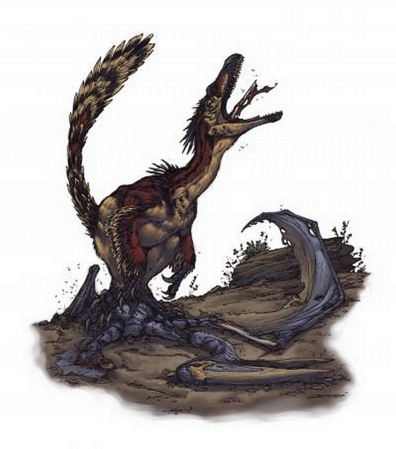 Paleontologie, l'actu... - Page 5 Veloci11