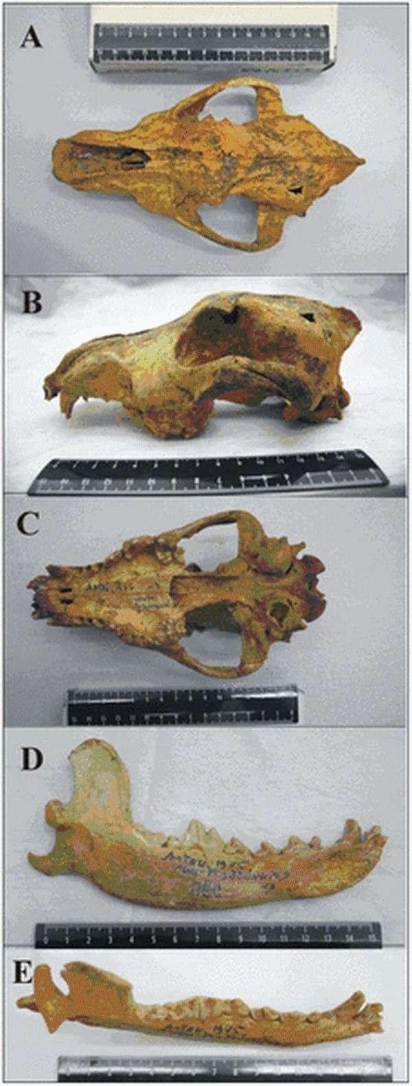 Paleontologie, l'actu... - Page 3 Vieux_10