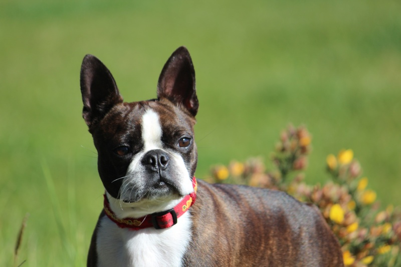 Vous êtes détenteurs de chiens de moins de 10kg ? Img_1711