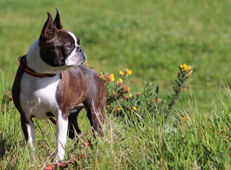 quand les gens confonde vos chiens avec une autre race!!! - Page 18 Img_1712