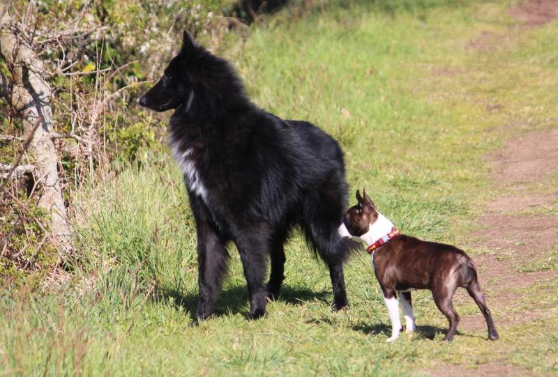 Vous êtes détenteurs de chiens de moins de 10kg ? Img_1713