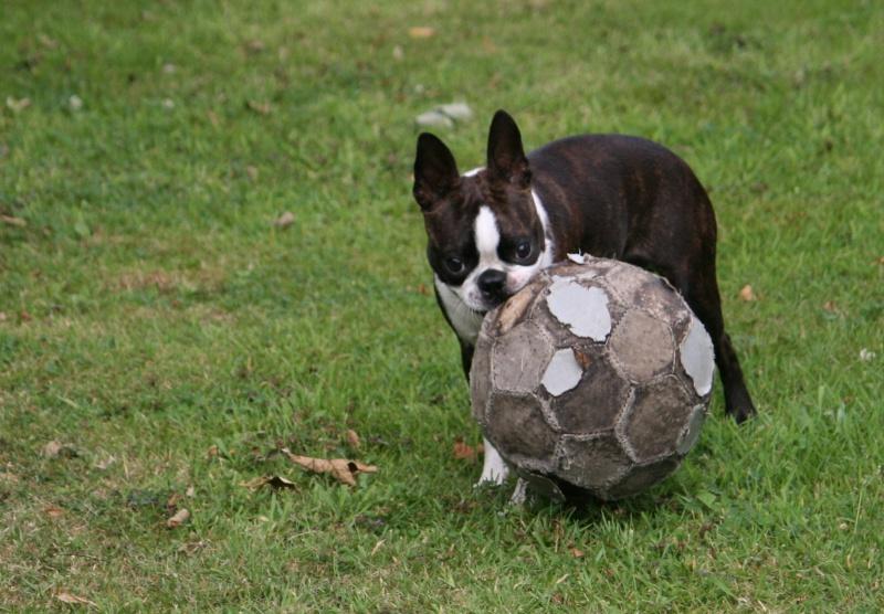 Vous êtes détenteurs de chiens de moins de 10kg ? Juille21
