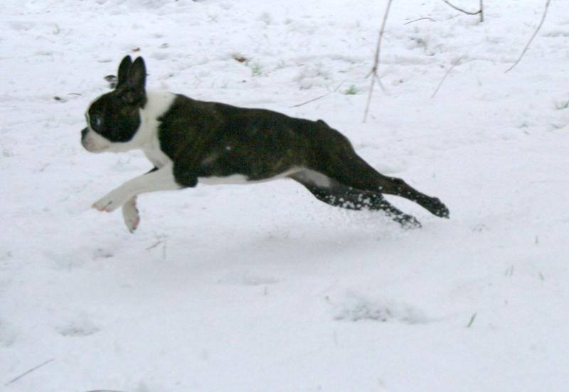 Vous êtes détenteurs de chiens de moins de 10kg ? Photo_13