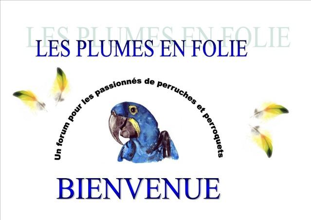 (forum perroquet, perruche)*LES PLUMES EN FOLIE* - PORTAIL Prasen10