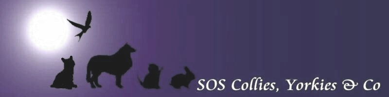 SOS Collies, Yorkies & Co