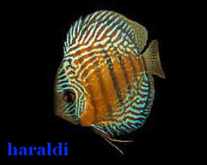 discus sauvage Harald10