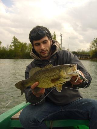 Black bass P1030733