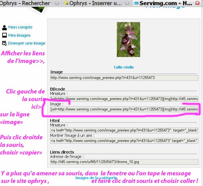 Inserrer une image avec Servimg.com Insere10