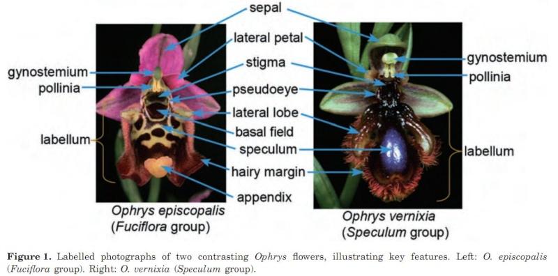 Un peu de science mais surtout des jolies images... Labell10