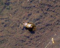 Pour sauver les grenouilles en Colombie Grenou10