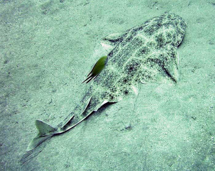STOP aux massacres des requins au Massachussets Requin10