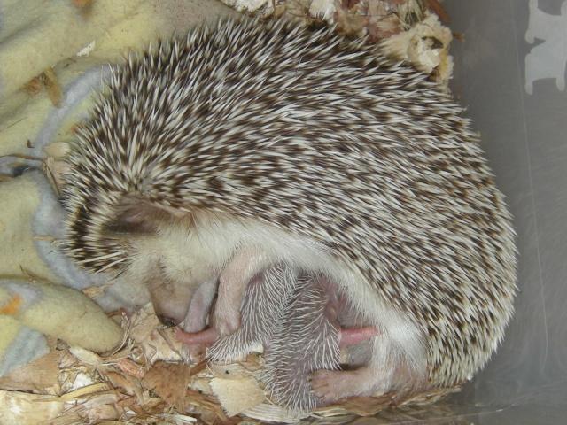 Kiara et ses bébés!! (Photos!) - Page 2 Pictur30