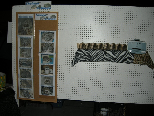 Salon des animaux de Papineau - Page 2 Pictur51