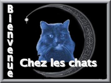 Bienvenue sur le Forum des Chats