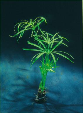 Plantes non aquatiques Floraq10